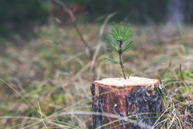 Resilienssi voimavarana – havu nousee